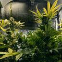 CO₂ Verwenden, Um Deine Cannabisernte Zu Erhöhen