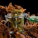 Ein Leitfaden für die richtige Trocknung und Aushärtung Deiner Cannabisbuds