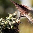 Wie hältst Du Vögel davon ab, in Deinen Cannabispflanzen rumzuhängen
