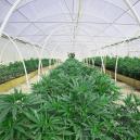 Baue Dir ein Gewächshaus für einfachen und erfolgreichen Weed-Anbau