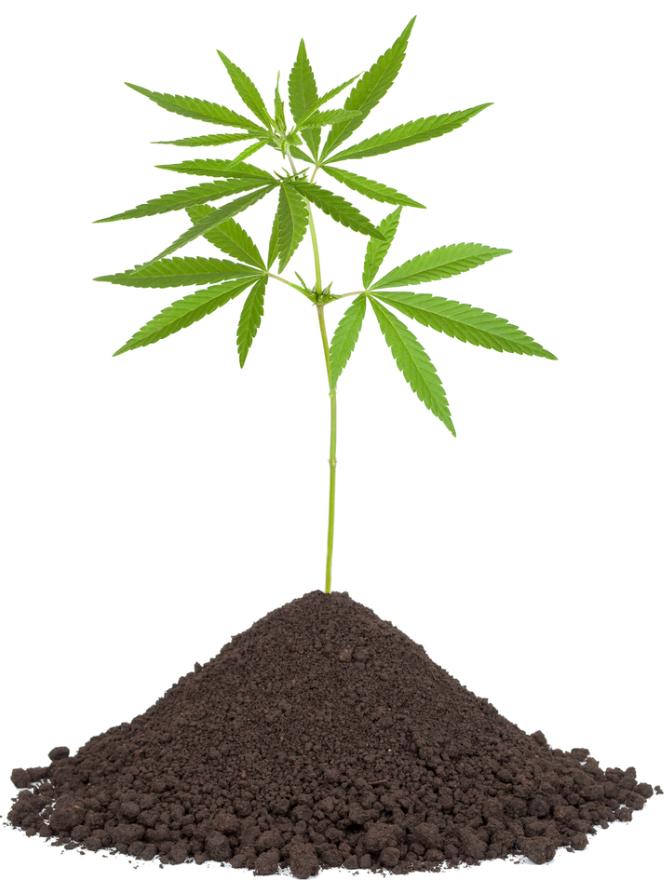 Wie man seinen eigenen boden f r die cannabissamen vorbereitet for Boden zusammensetzung