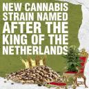 Neue Cannabis Sorte nach dem König der Niederlande benannt