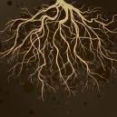 Gesunde Wurzeln Für Cannabispflanzen