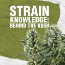 Strain Knowledge: Ein genauerer Blick auf die Kush