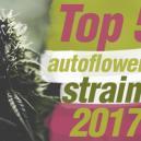 Die Top 5 autoflowering Sorten 2017