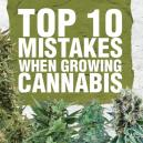 Die 10 häufigsten Fehler beim Anbau von Cannabis und wie man