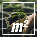 Wie viele Cannabispflanzen pro Quadratmeter?