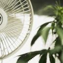 Die Bedeutung von Luftstzirkulation beim Anbau von Cannabis