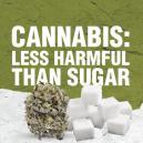 Cannabis Ist Weniger Schädlich Als Zucker
