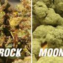 Monnrocks vs. Sunrocks: Zu potent?
