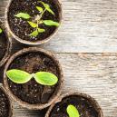 Produzieren auch andere Pflanzenarten Cannabinoide?