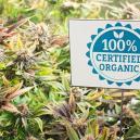 Biologische Methoden der Schädlingsbekämpfung für Cannabispf