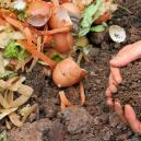 Cannabis und selbstgemachter Kompost: Herstellung, Lagerung