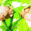 Top 10 der Gründe für langsames Cannabiswachstum