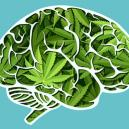 Wie Cannabis Dein Gehirn beeinflusst