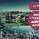 Die besten Indica-Cannabissorten für nördliche Klimazonen