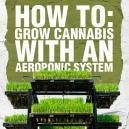 Wie man Cannabis mit einem aeroponischen System züchtet