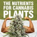 Die Nährstoffe für Cannabispflanzen