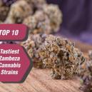 Die 10 leckersten Cannabissorten von Zambeza