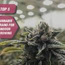Die Top 5 Cannabissorten für den Indoor-Anbau