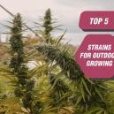 Top 5 Sorten für den Anbau im Freien