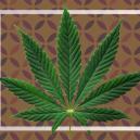 Was sind Cannabisfächerblätter?