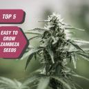 Die Top 5 einfach anzubauenden Samen von Zambeza