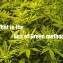 Was Ist Die Sea Of Green Methode?
