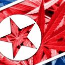 Cannabis In Nordkorea