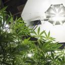 Beleuchtungspläne Für Cannabispflanzen