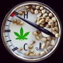 Die ideale Temperaturspanne zum Anbau von Cannabis