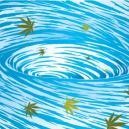 Cannabispflanzen Spülen